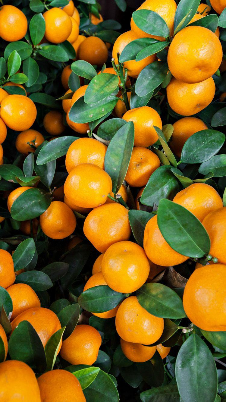 Orange Fruit Wallpapers Wallpaper Cave