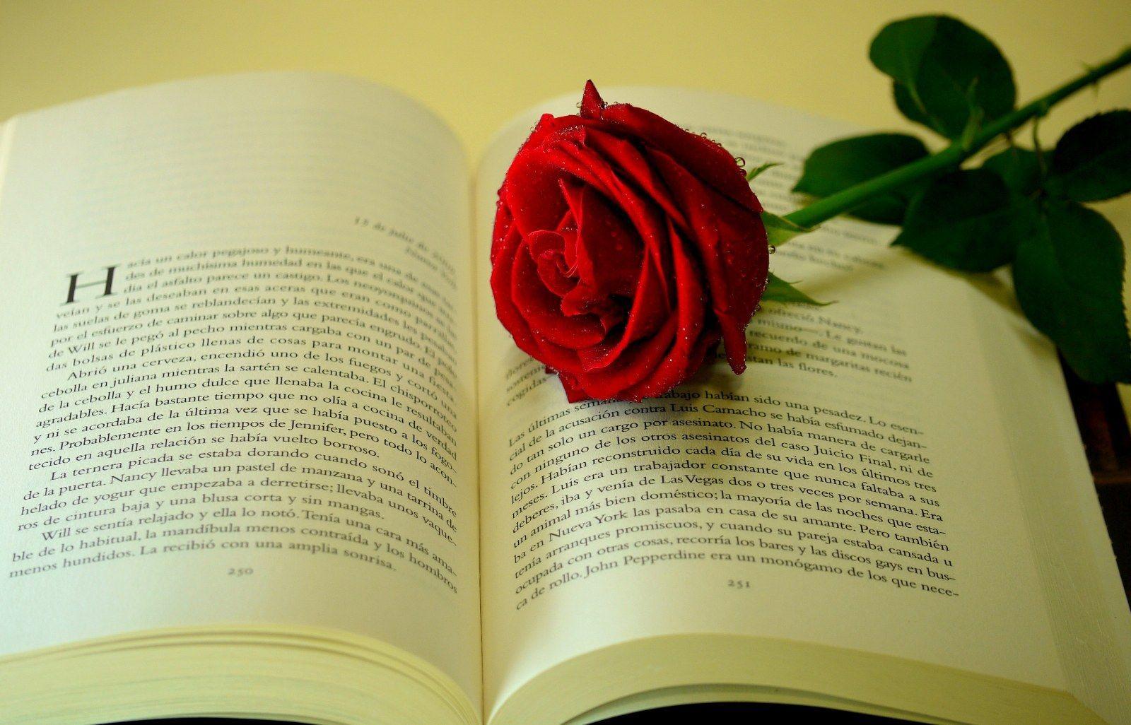 flower flowers rose lover wallpapers desktop books lovers relationship literature pantser amor amo lectura leer por romance romancing words wallpapercave