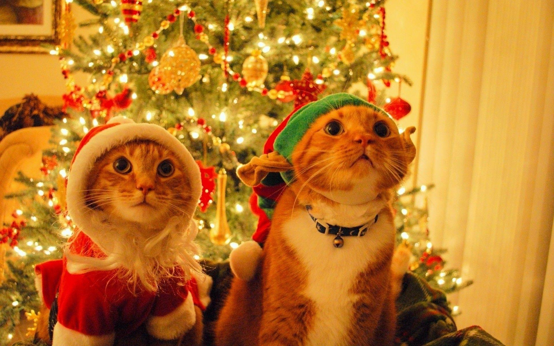 Christmas Cats Wallpapers Wallpaper Cave