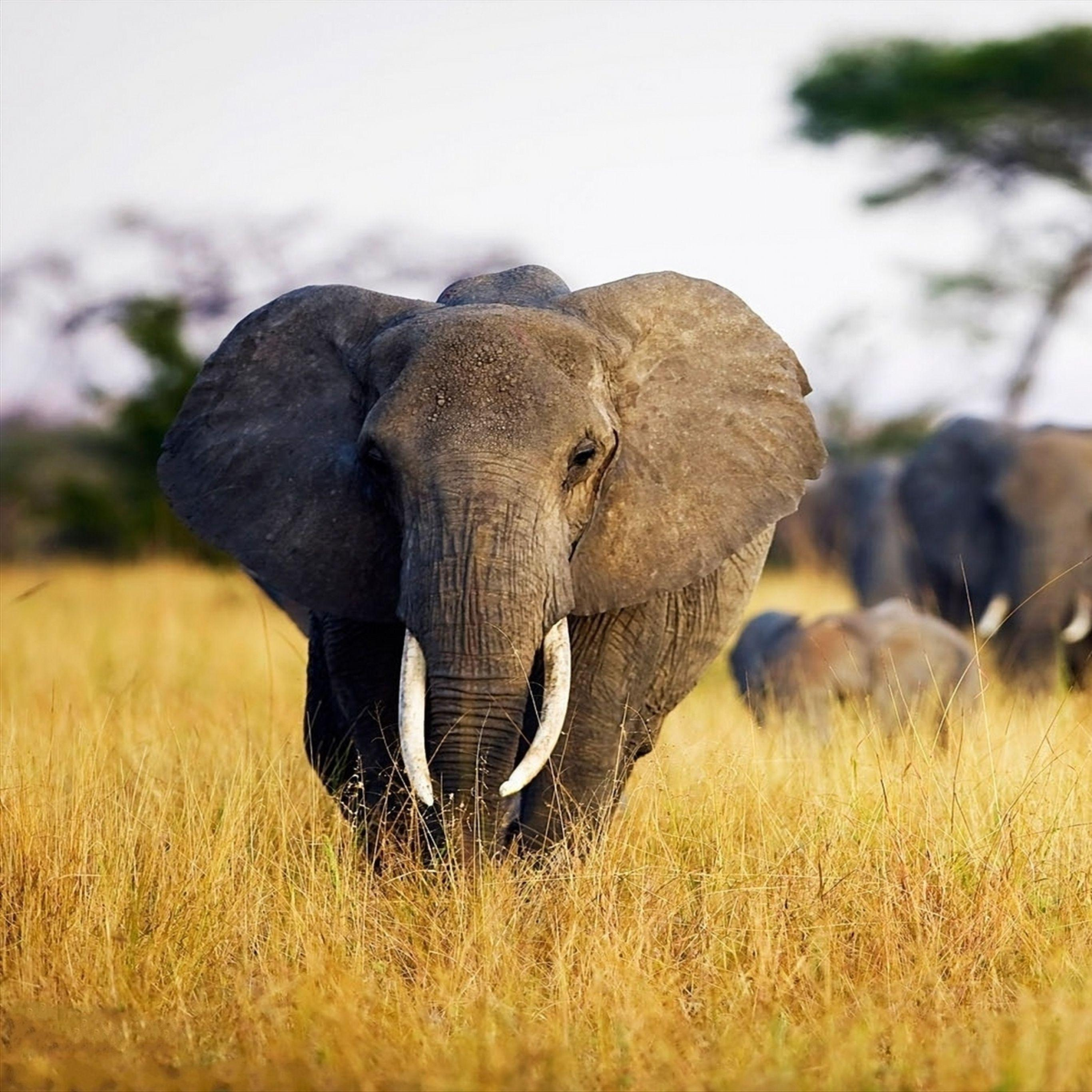 Indian Elephant Wallpapers - Wallpaper Cave