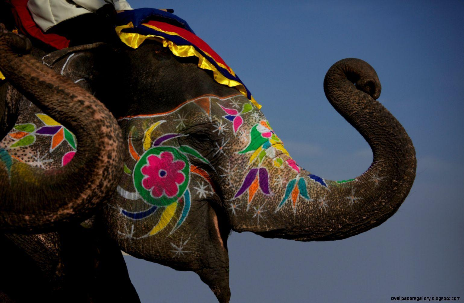 painted indian elephant wallpaper -#main
