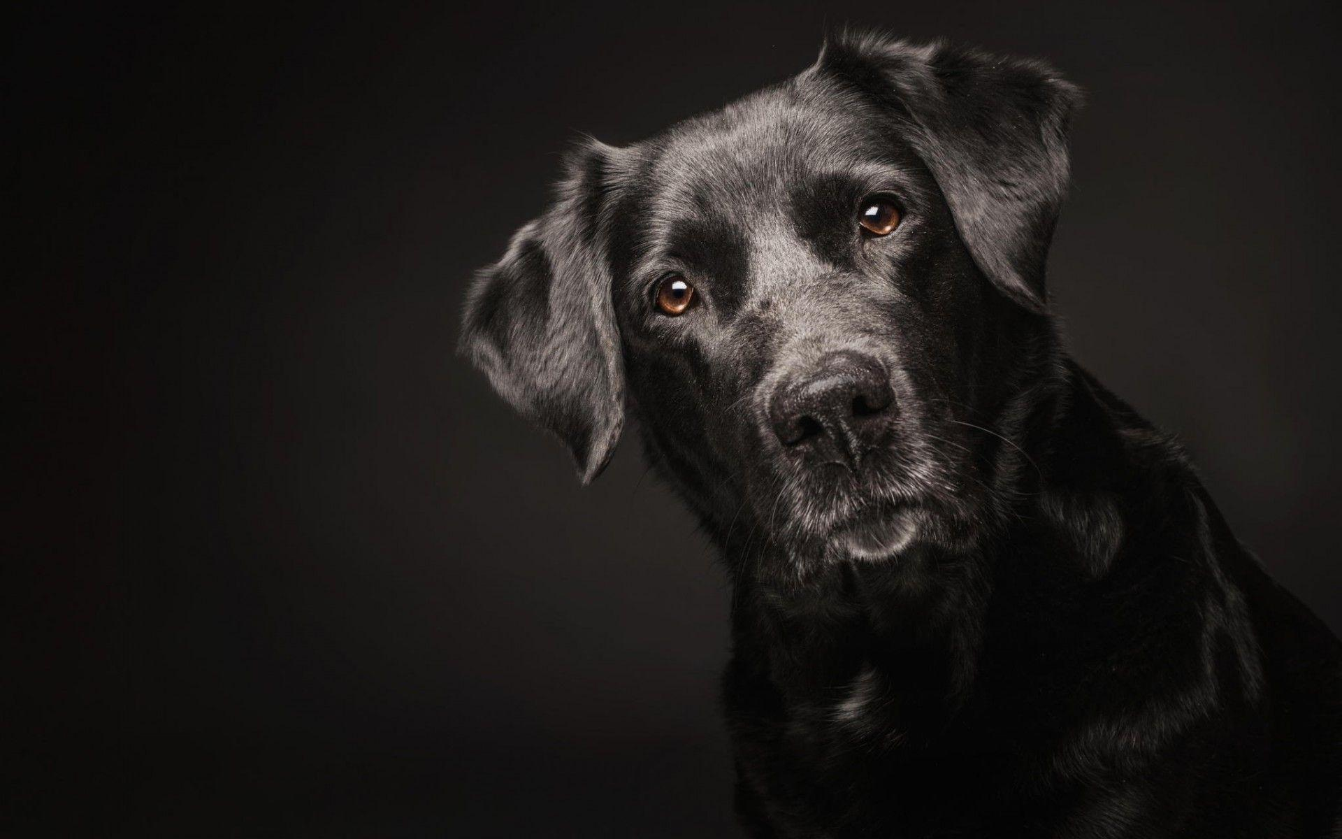 Black Dog Wallpapers Wallpaper Cave