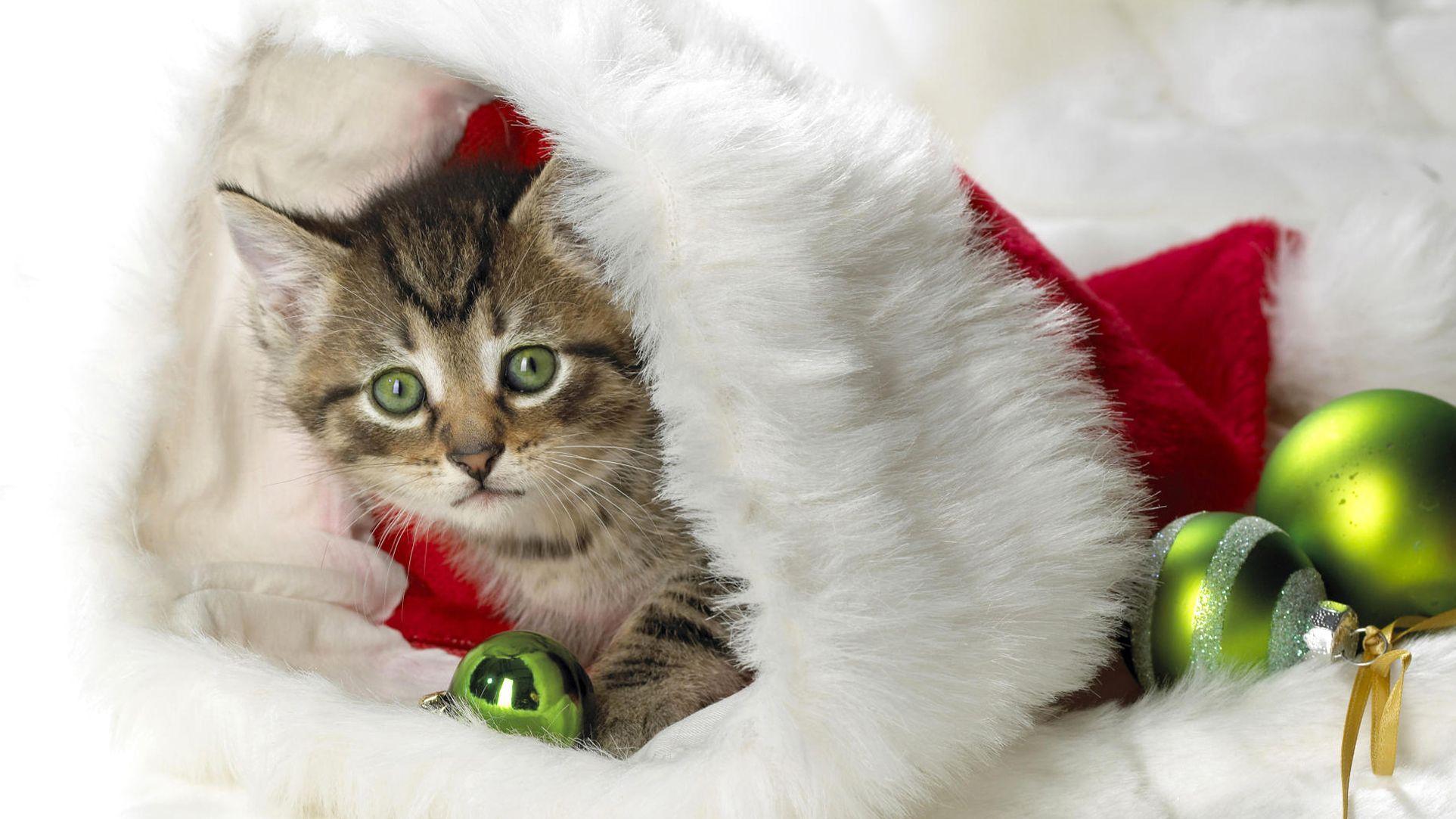 Christmas Cat Wallpapers - Wallpaper Cave