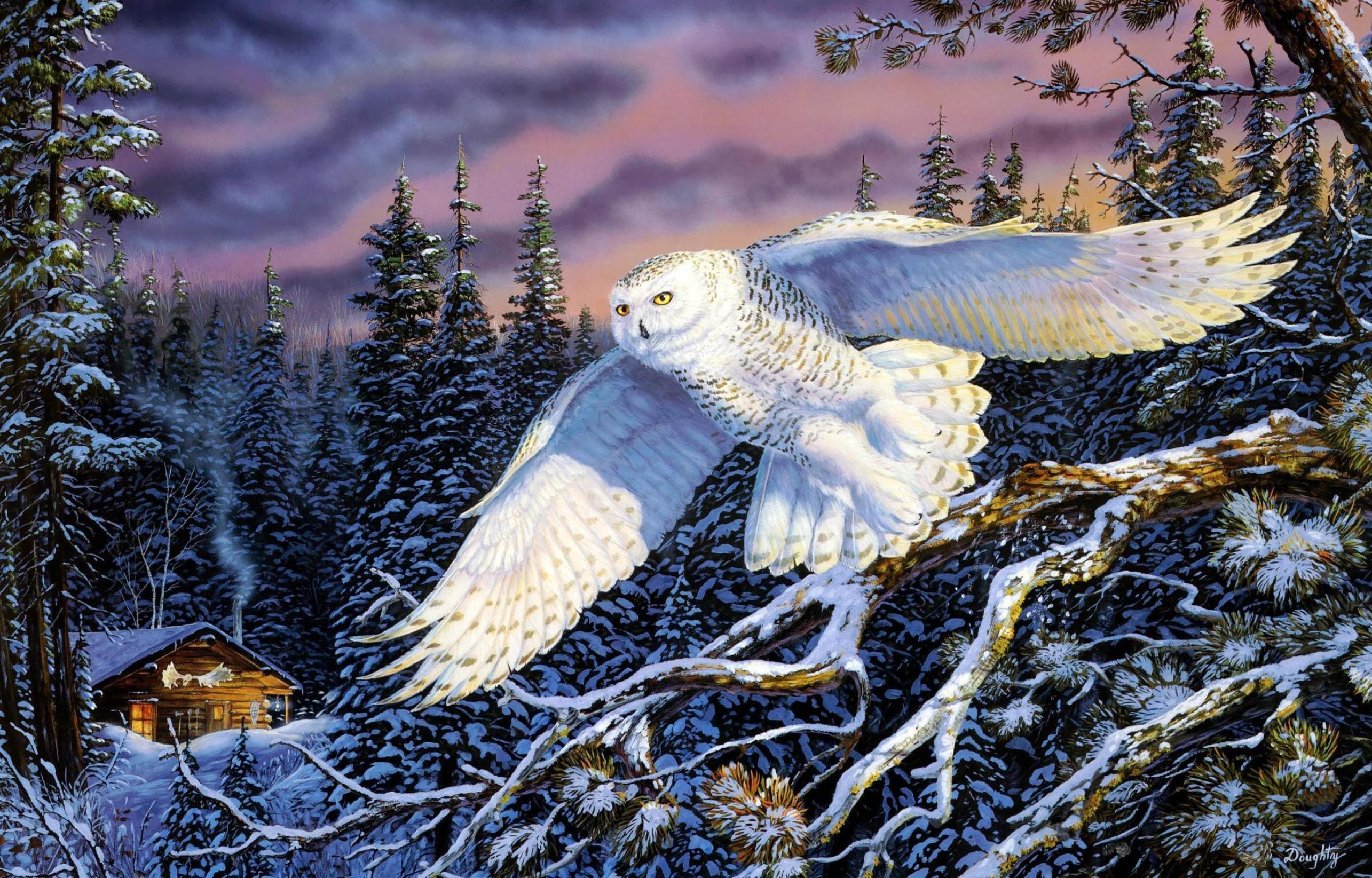 87 Snowy Owl HD Wallpapers | Backgrounds - Wallpaper Abyss