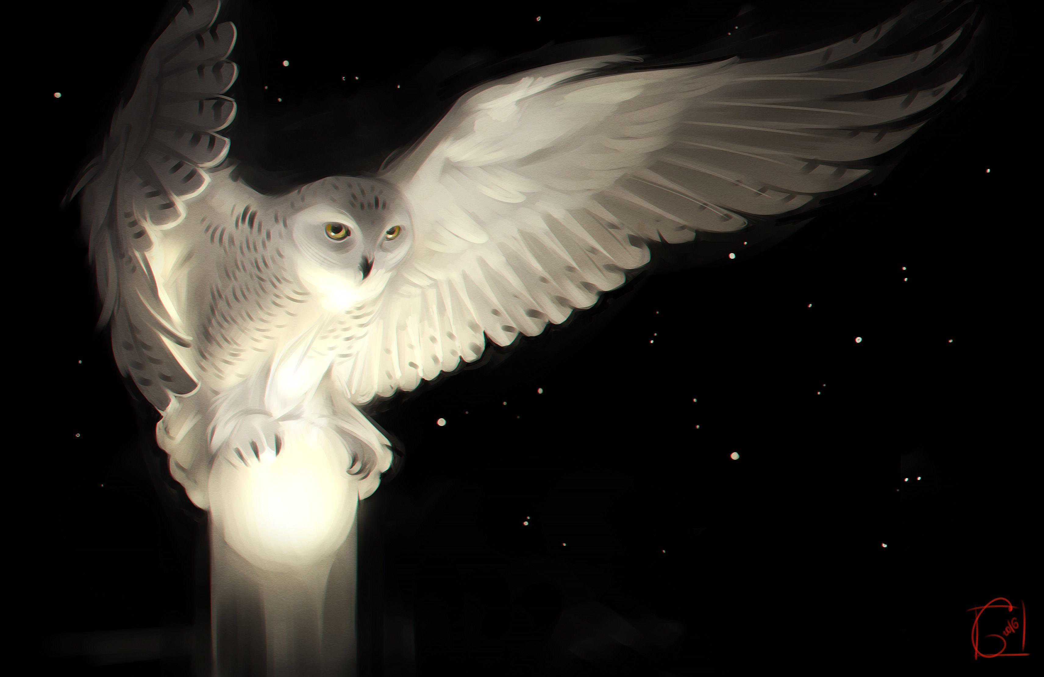 Snowy Owl | Artist HD 4k Wallpapers