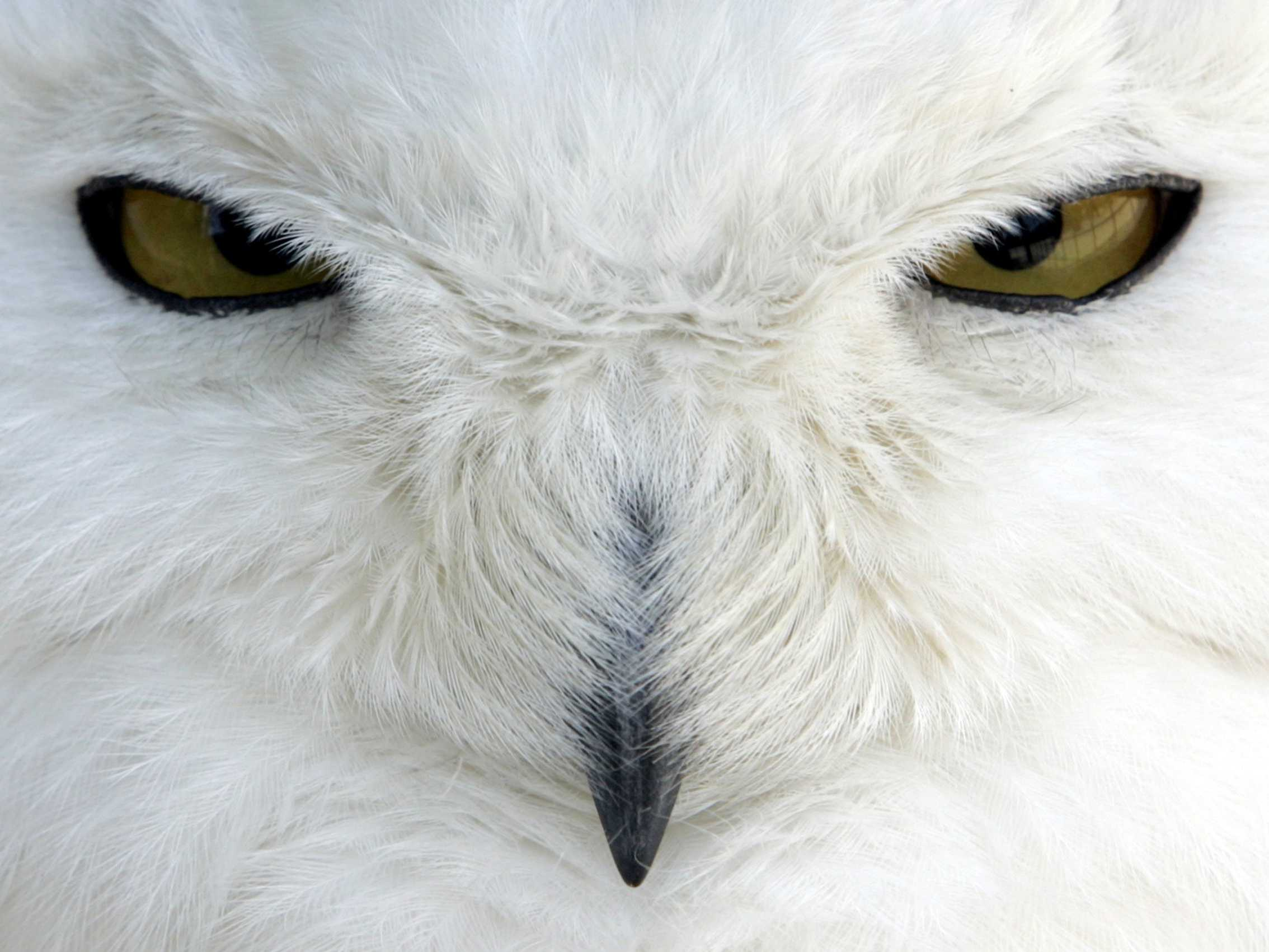 JFK Airport Shooting Snowy Owls On Sight - Business Insider