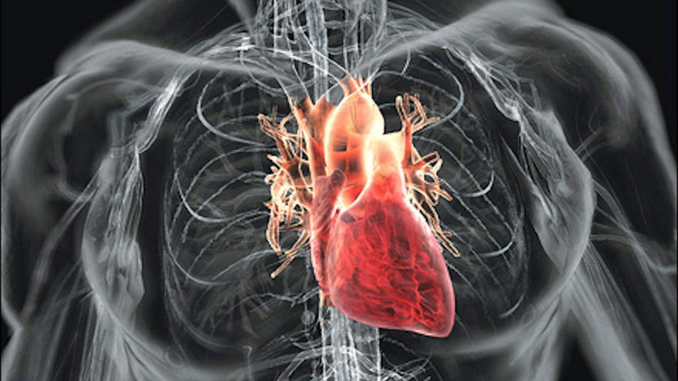 Human heart wallpapers wallpaper cave human heart hd photo diagram of human heart full hd wallpaper ccuart Images