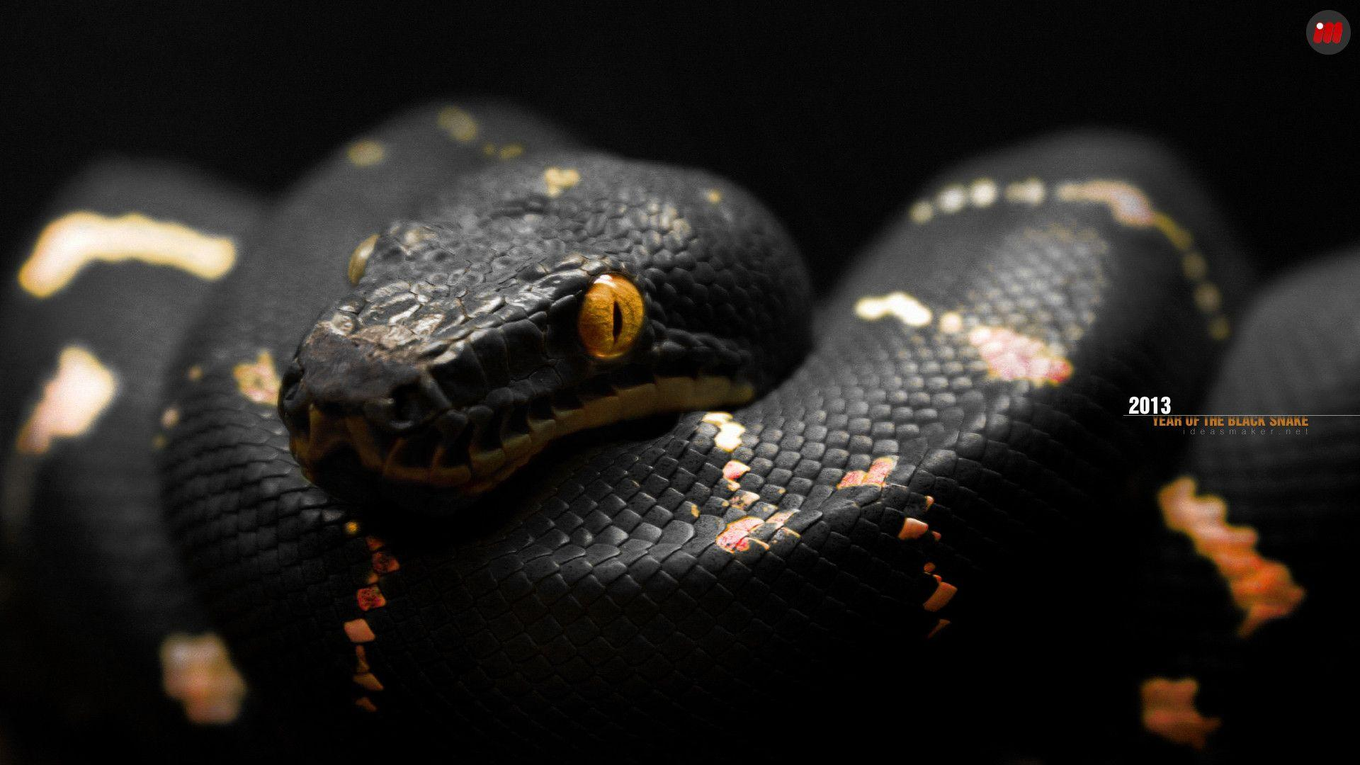 Snake HD Wallpapers Backgrounds Wallpaper 1600x1000 Black