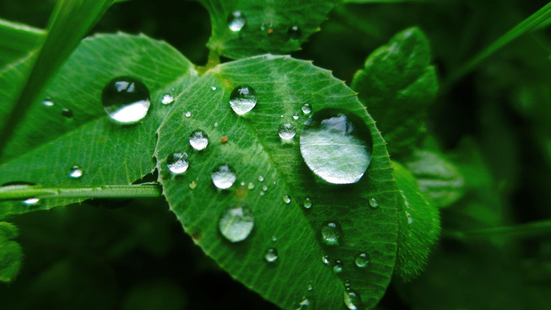 Morning Dew On Leaves Wallpapers Wallpaper Cave