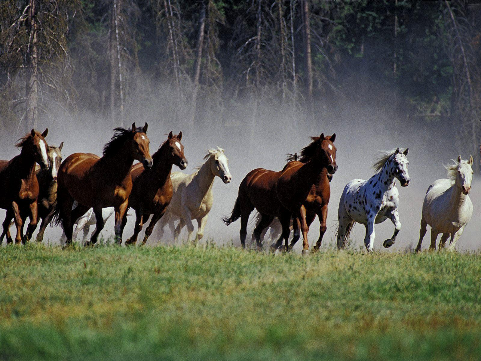 Seven Horses Wallpapers Wallpaper Cave