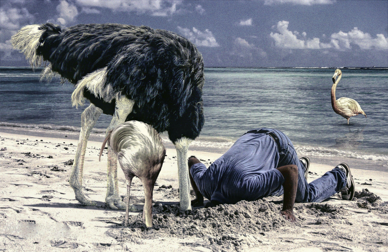birds desert ostrich hd - photo #33