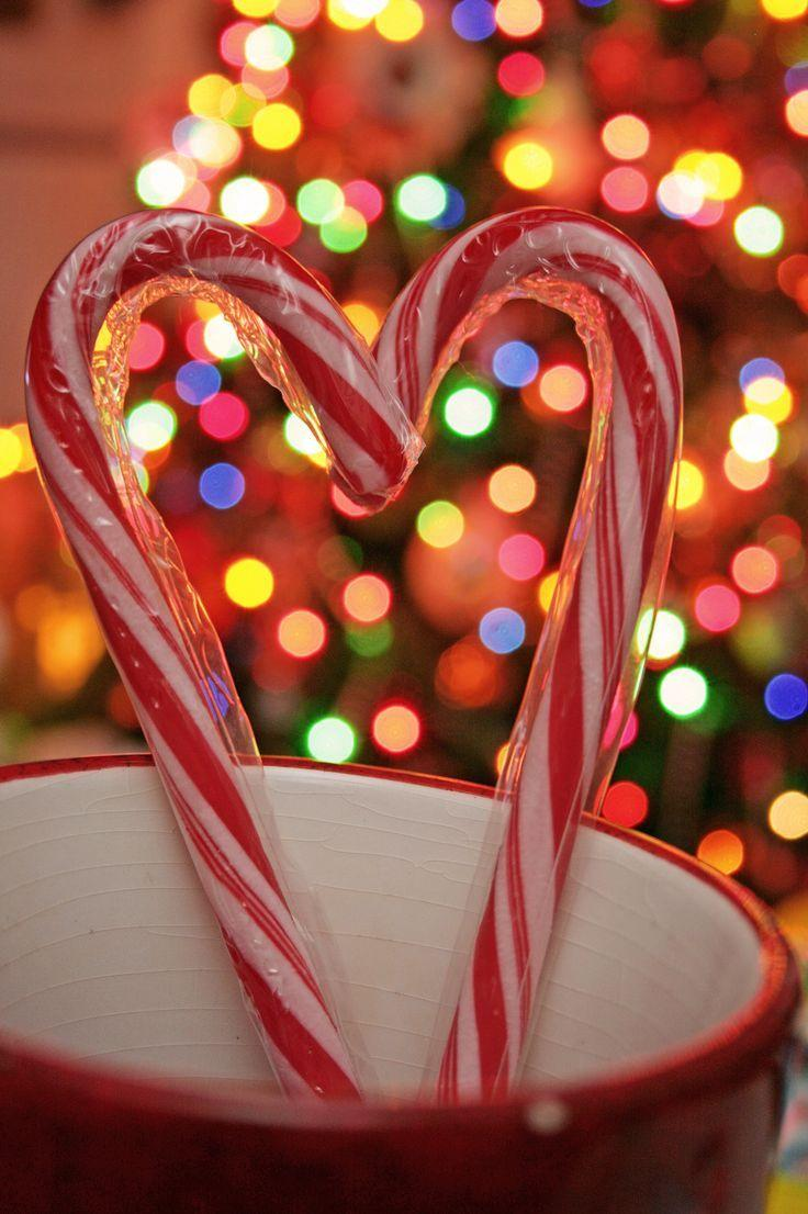 564 best Candy Cane Red White Peppermint image
