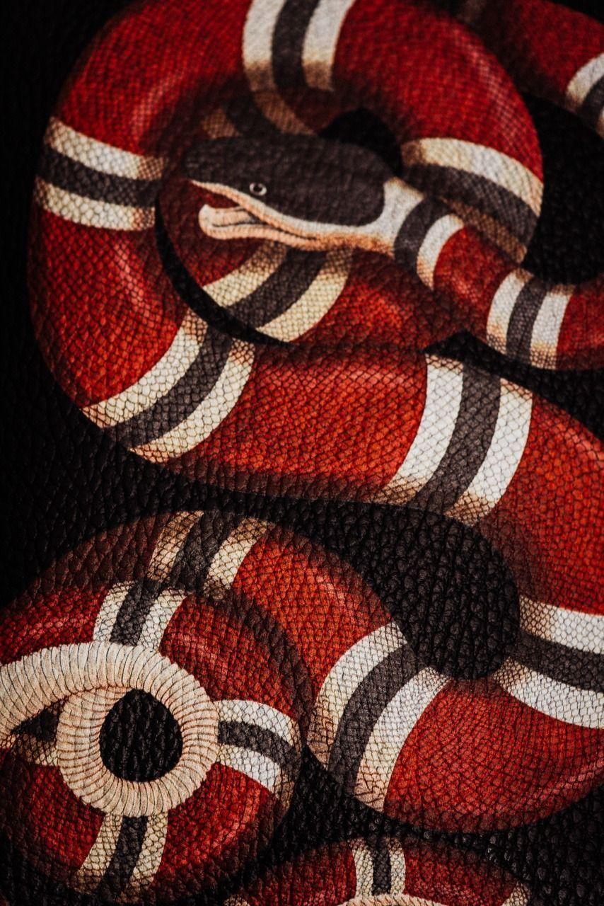 Gucci Snake hashtag Image on Tumblr