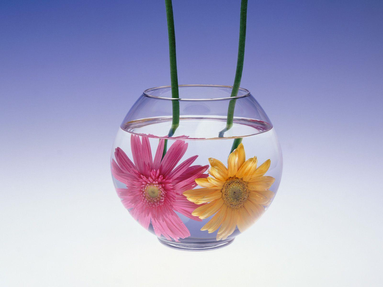 Flowers in Water Wallpapers | HD Wallpapers