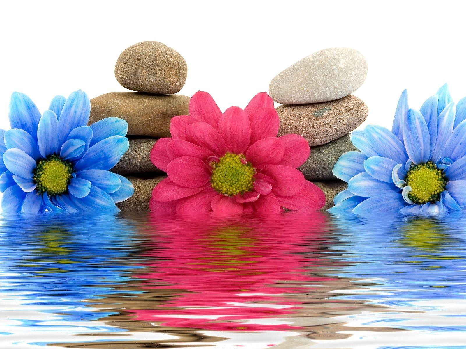 Wallpaper Flowers, Three, Water, Rocks, Reflection HD, Picture, Image
