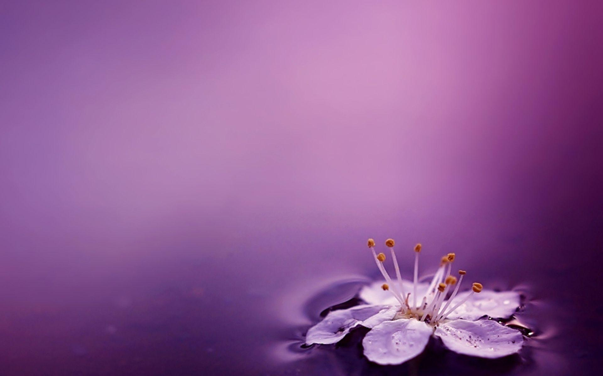 Beautiful Purple Flower Wallpapers Background On High Resolution ...
