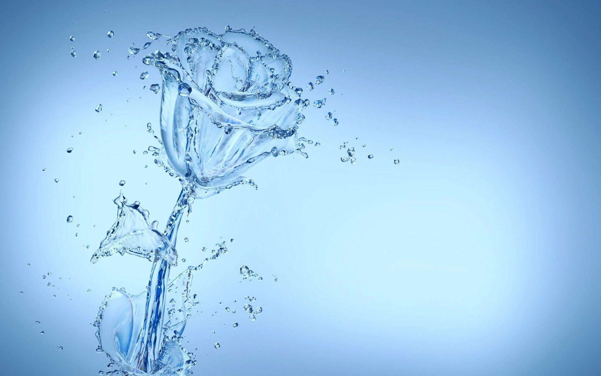 Cool Water Flower Wallpaper 37544 1920x1200 px ~ HDWallSource.com