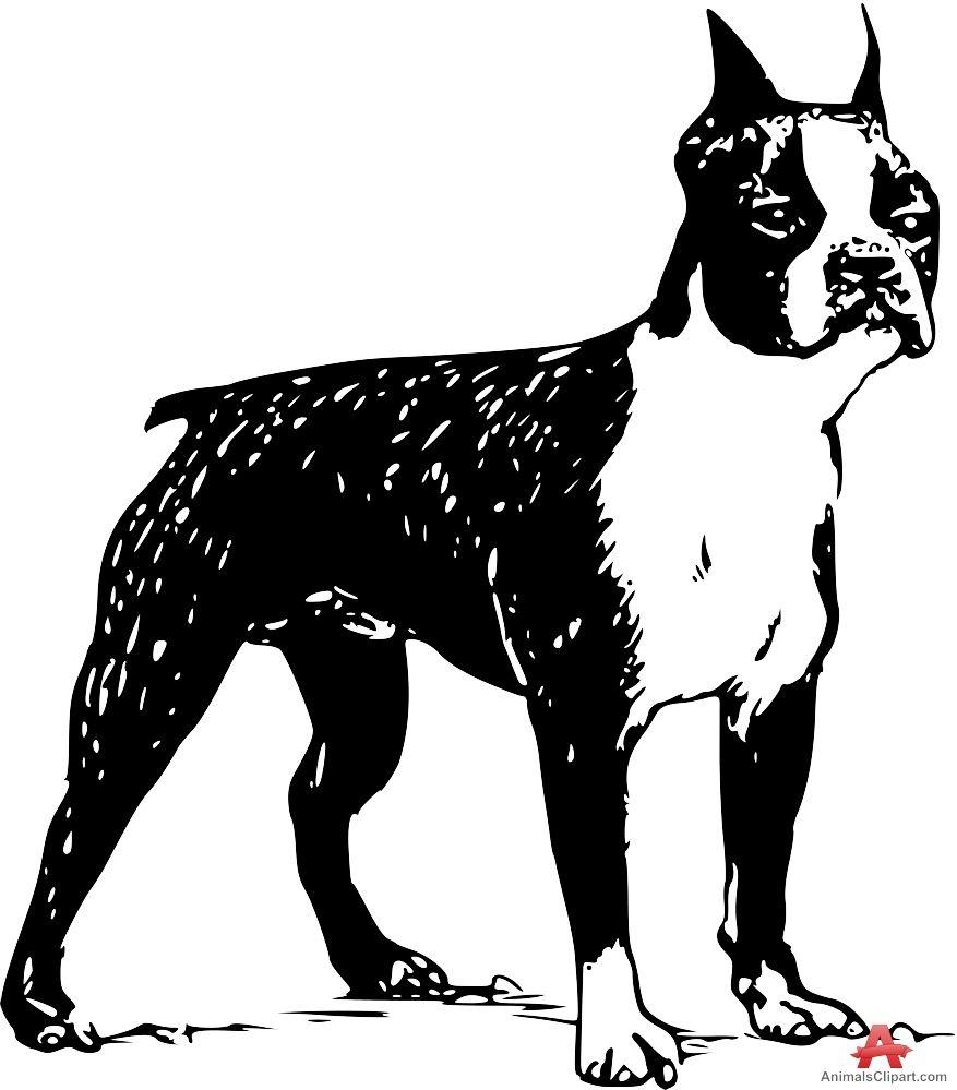 Boston Terrier clipart wallpapers