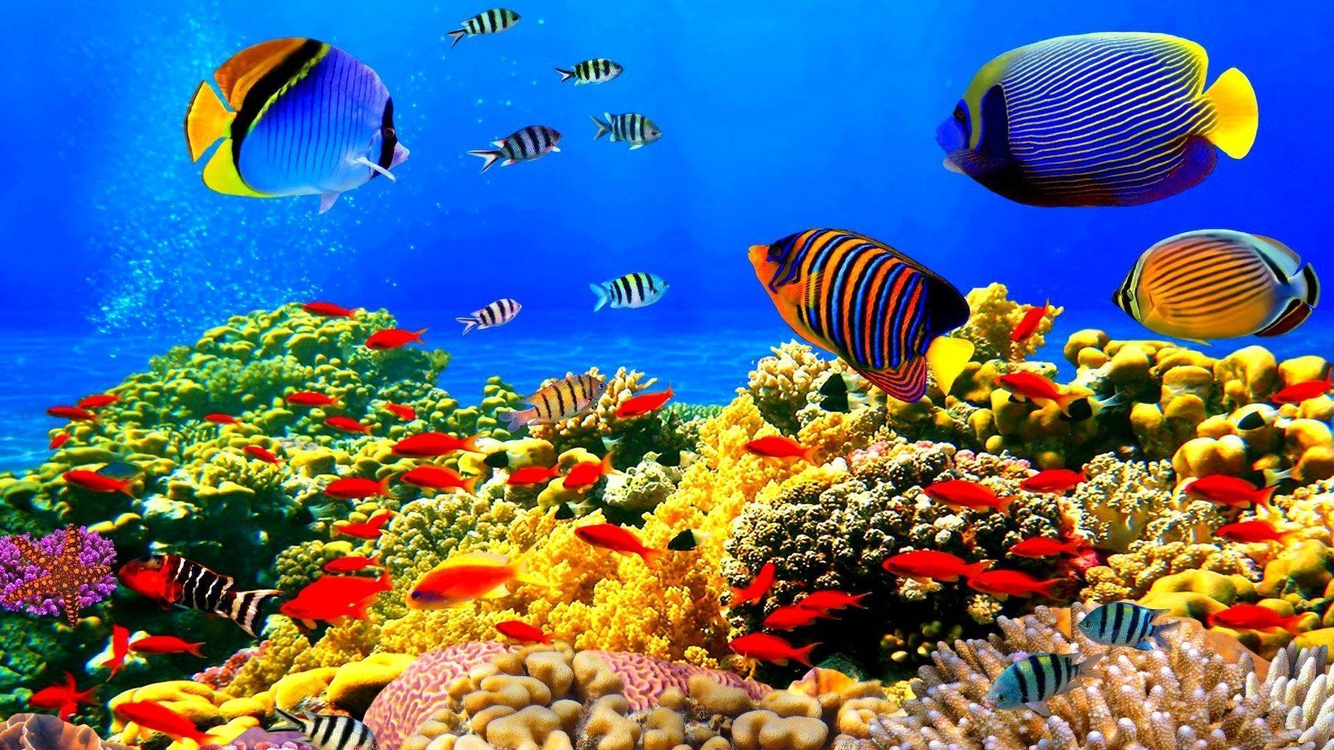 Fish Pot Wallpapers - Wallpaper Cave