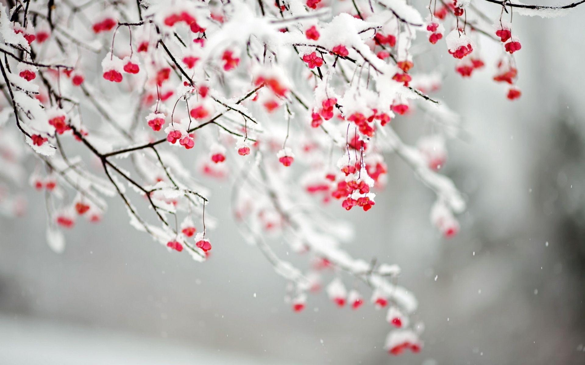 winter flowers wallpapers - wallpaper cave