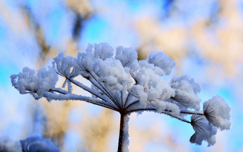 winter flowers hd wallpapers - flowers healthy