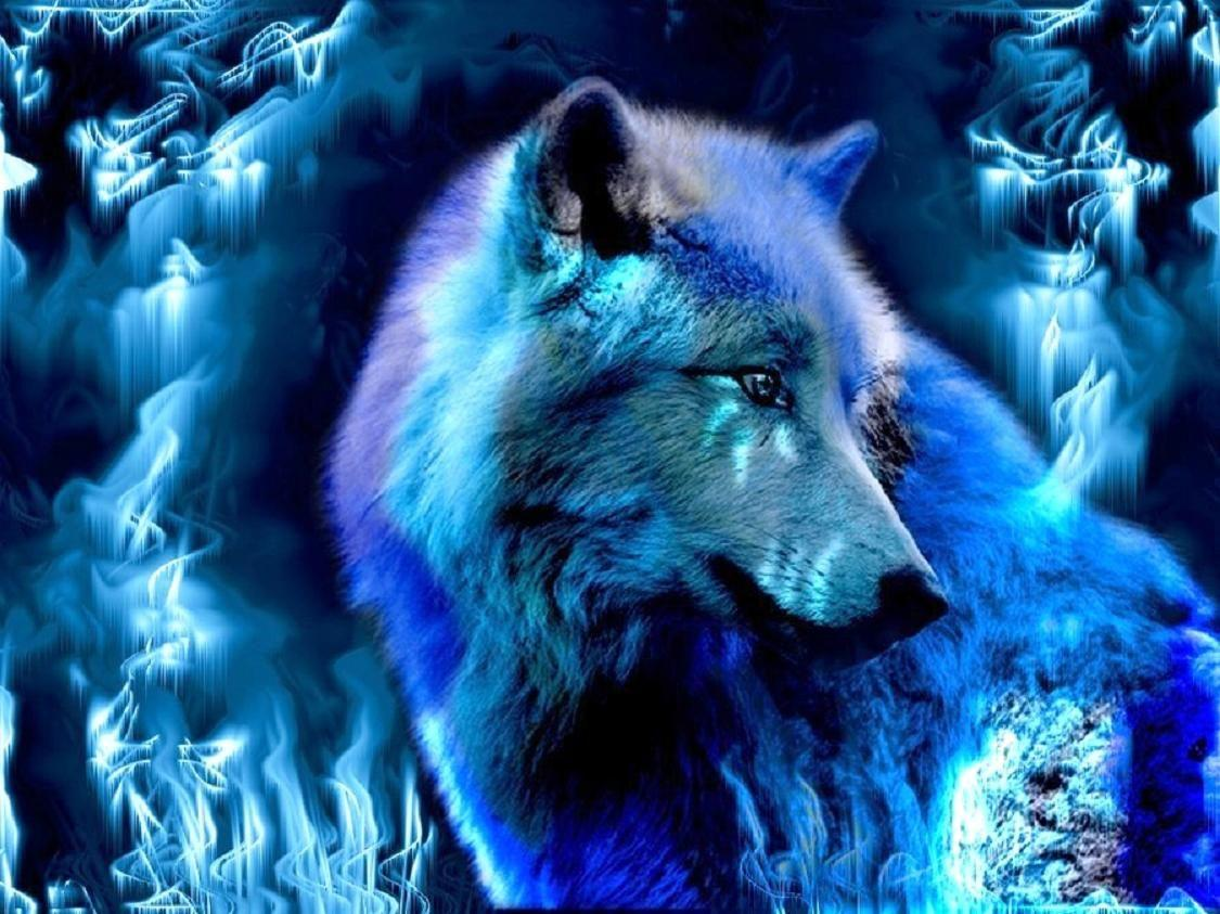 blue wolf wallpapers Collection