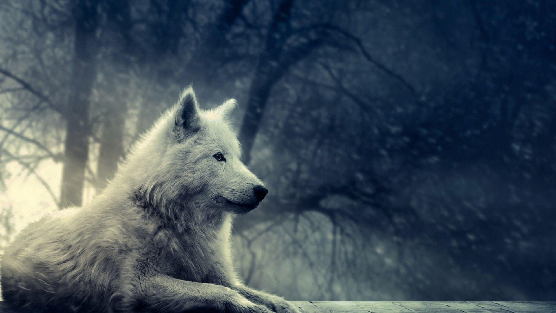 White Wolf Wallpapers Phone : Animal Wallpapers