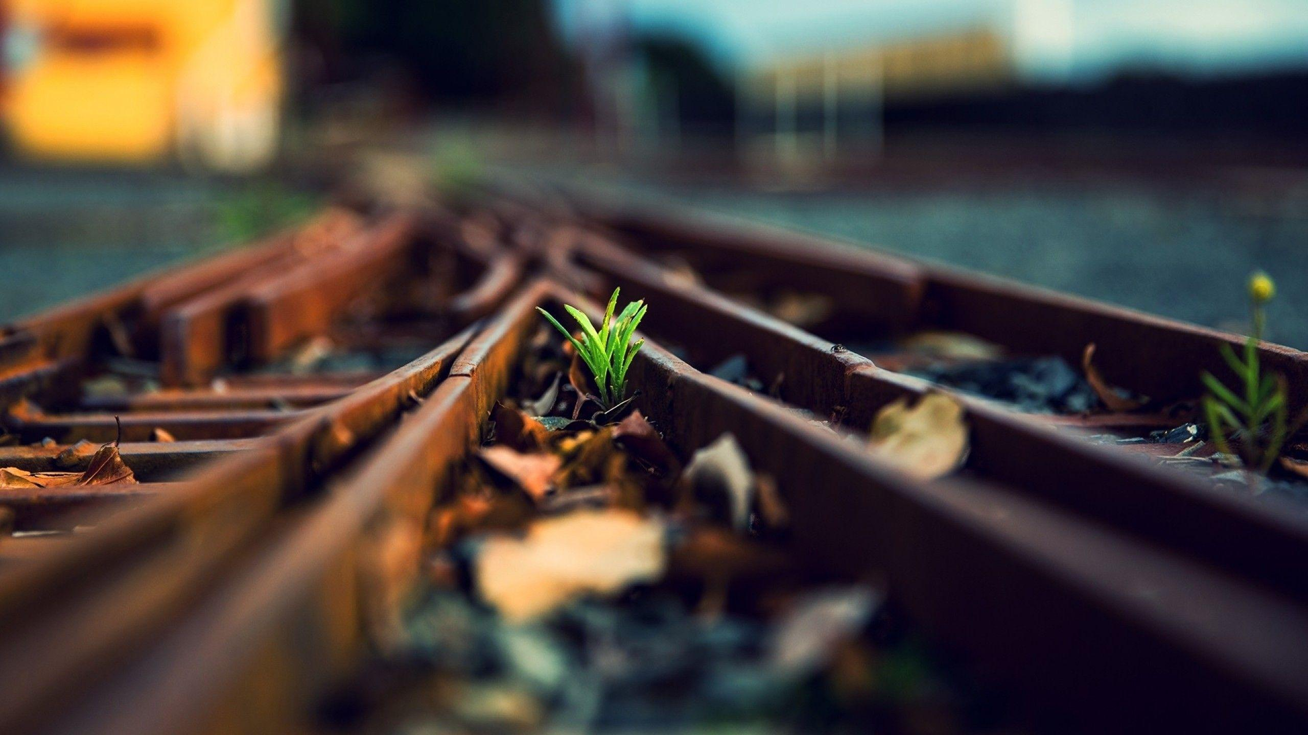 Download 2560x1440 Railway, Tracks, Plants, Blurred Wallpapers for