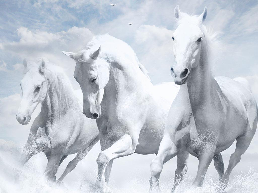 White Horses Wallpapers Wallpaper Cave