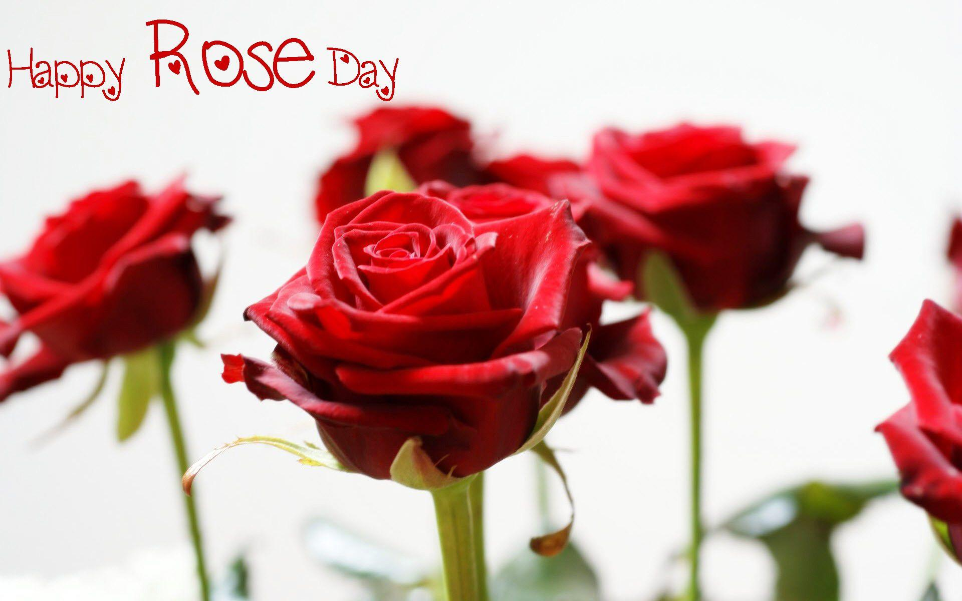 Happy Rose Day Wallpapers Wallpaper Cave