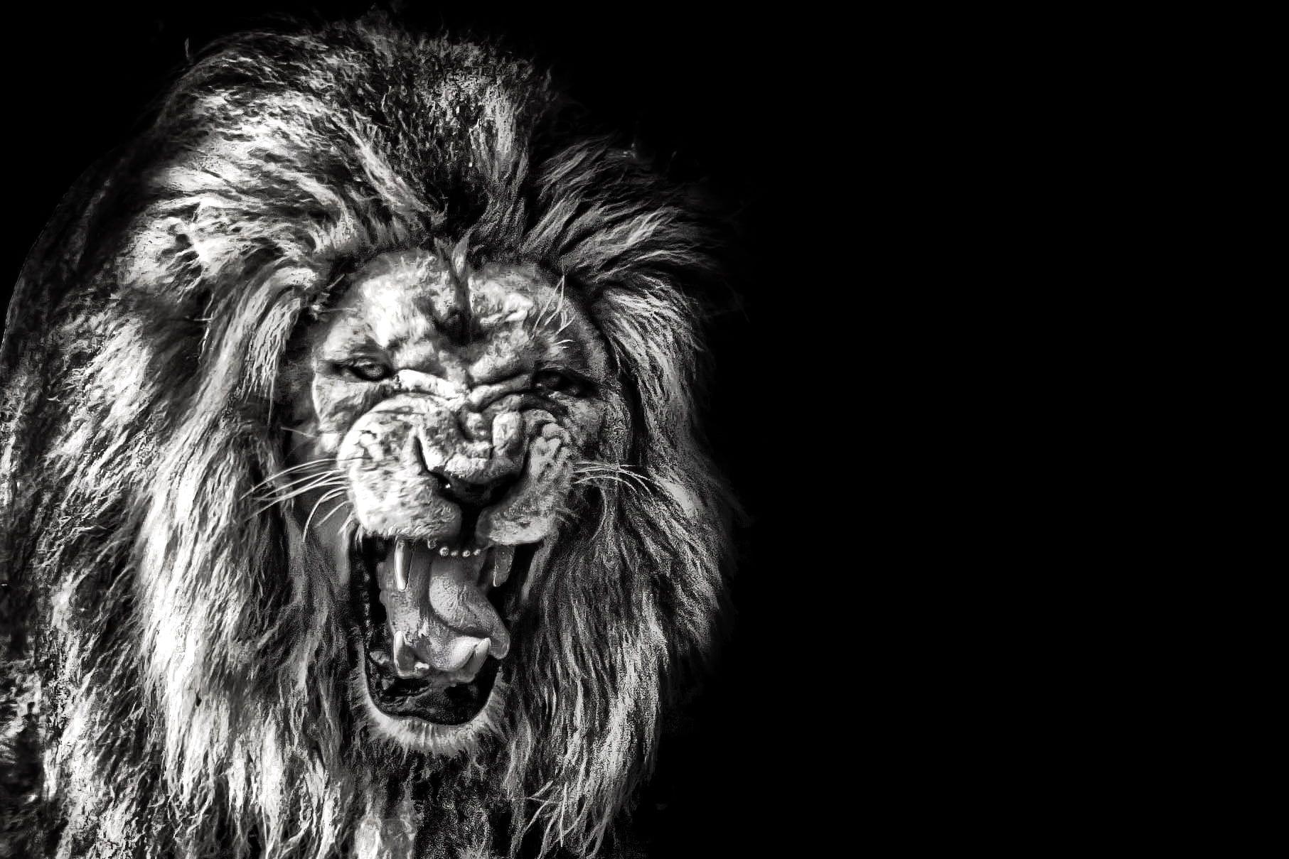 Image Of A Roaring Lion Dowload: Lion Roar Wallpapers