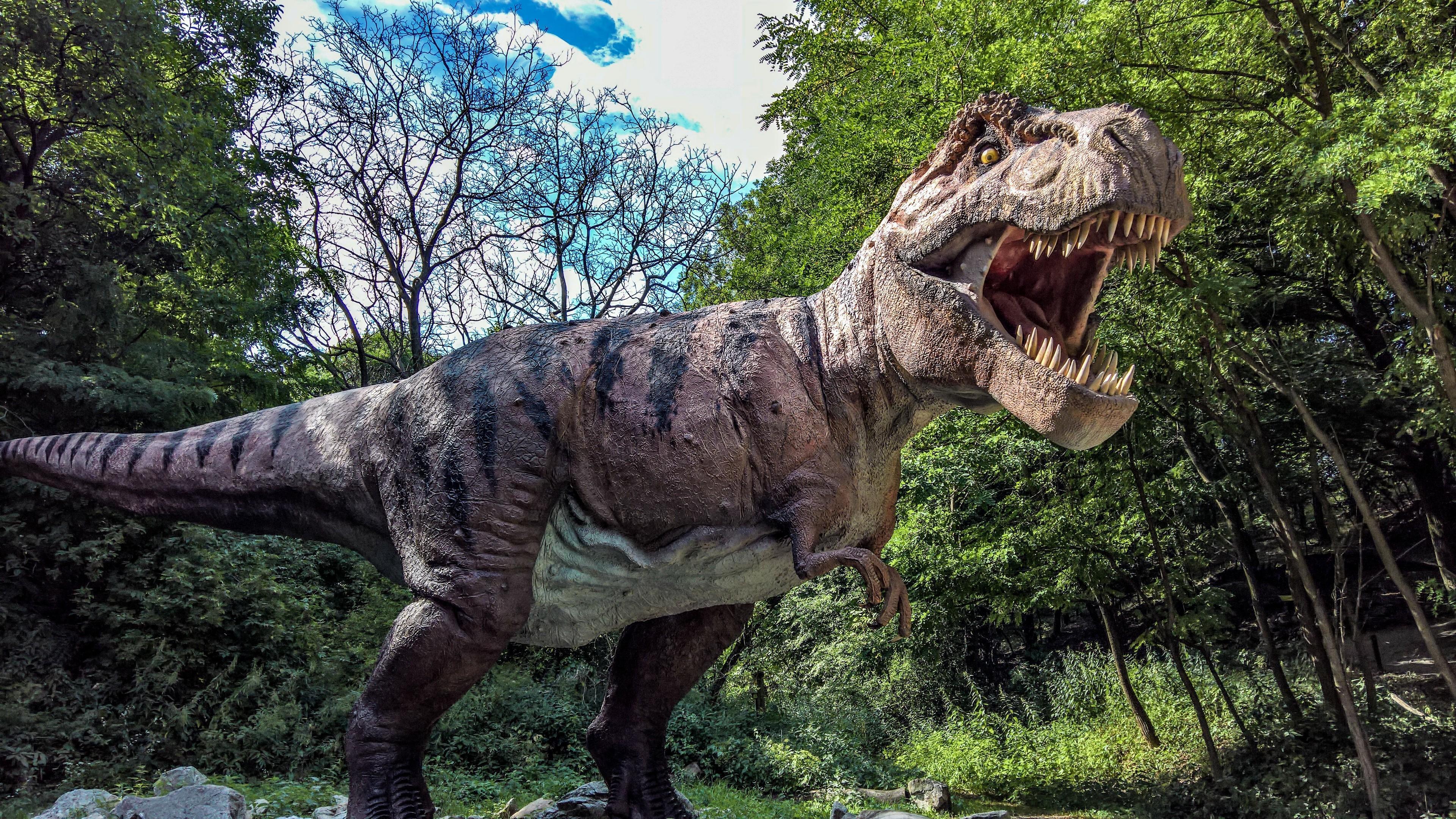 t rex dinosaur wallpapers  wallpaper cave