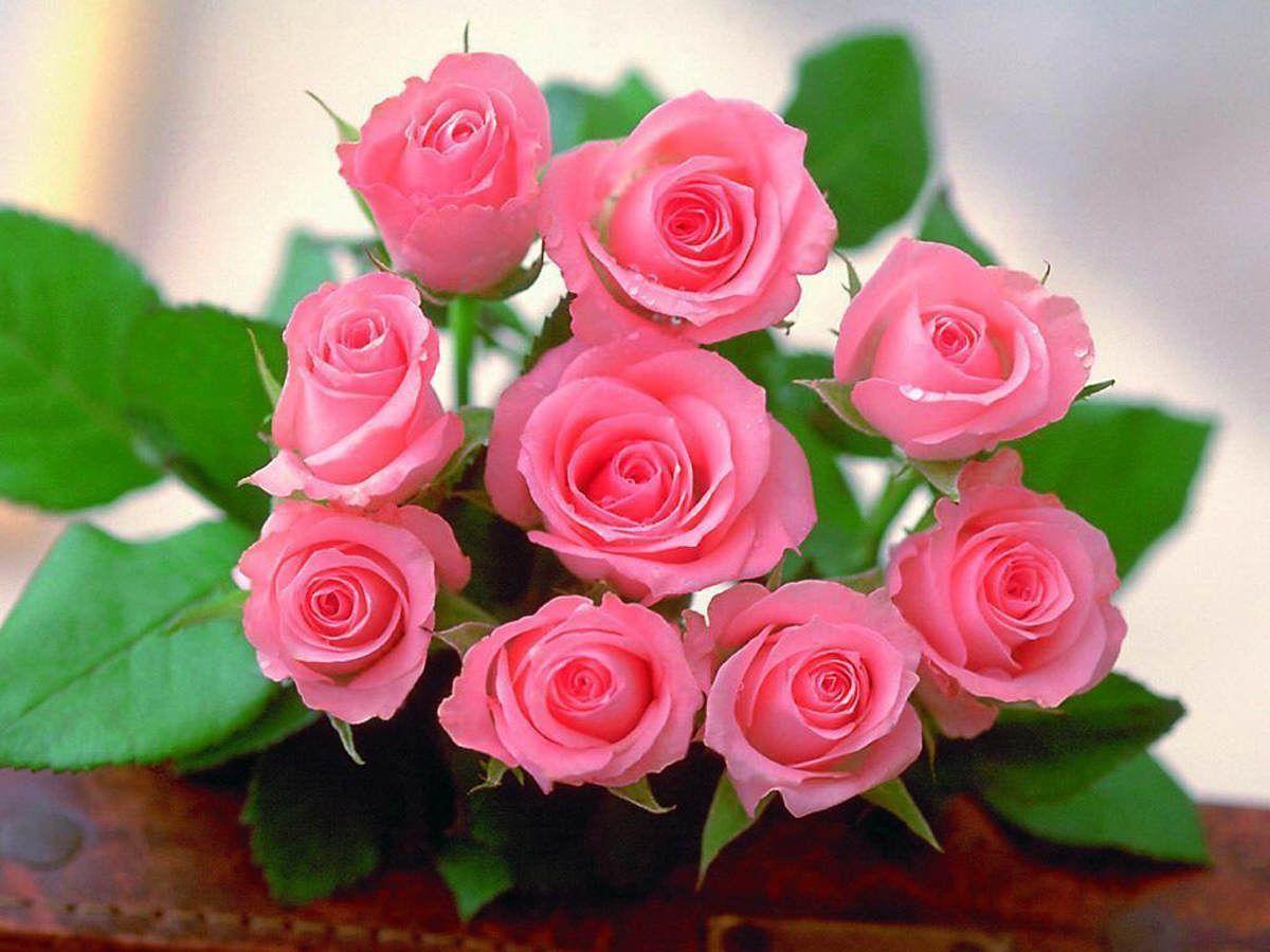 Beautiful Rose Hd Wallpapers Wallpaper Cave