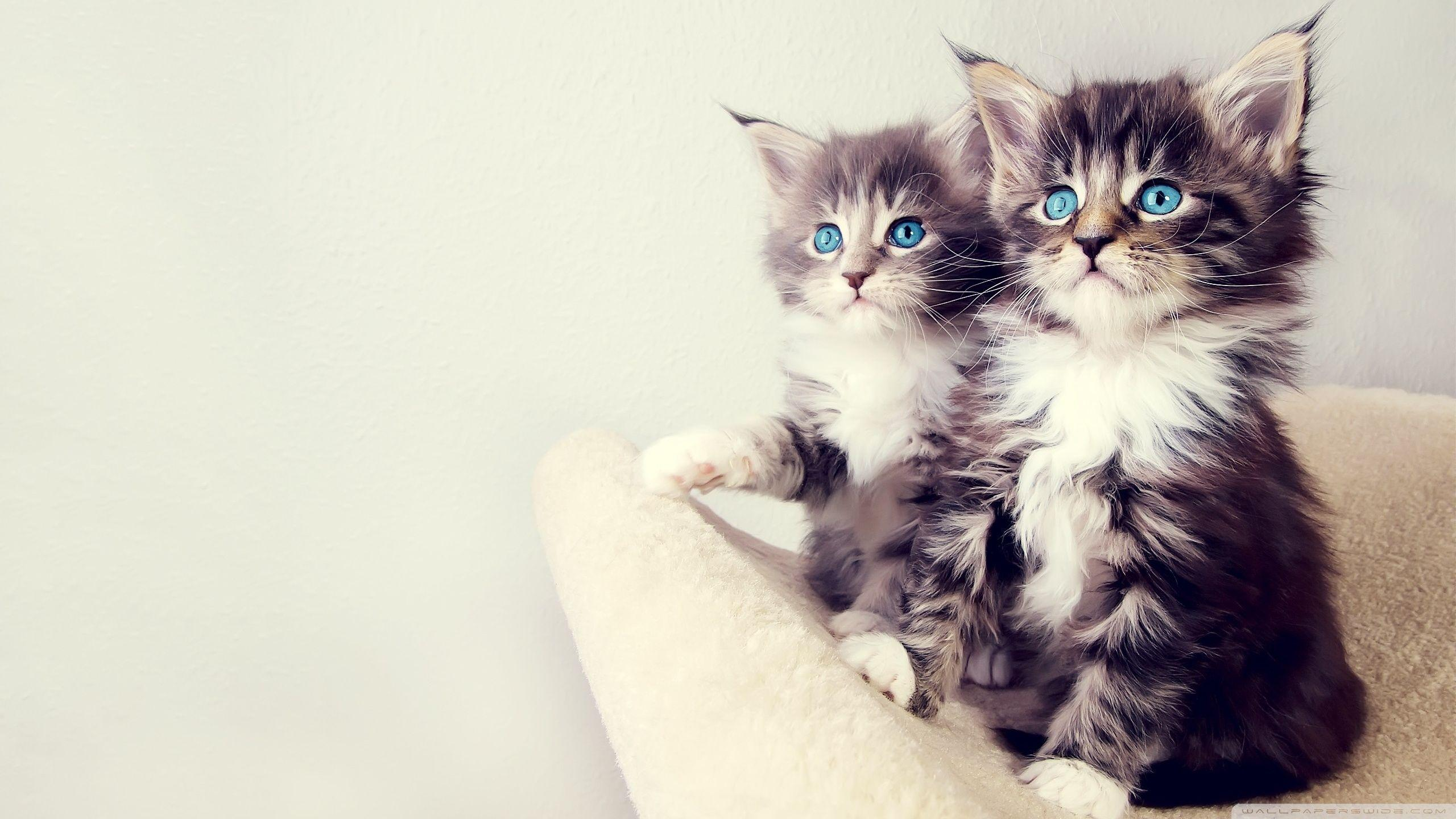 Cute Kittens Hd Wallpapers Wallpaper Cave