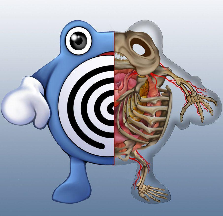 Poliwhirl Anatomy by Christopher-Stoll on DeviantArt