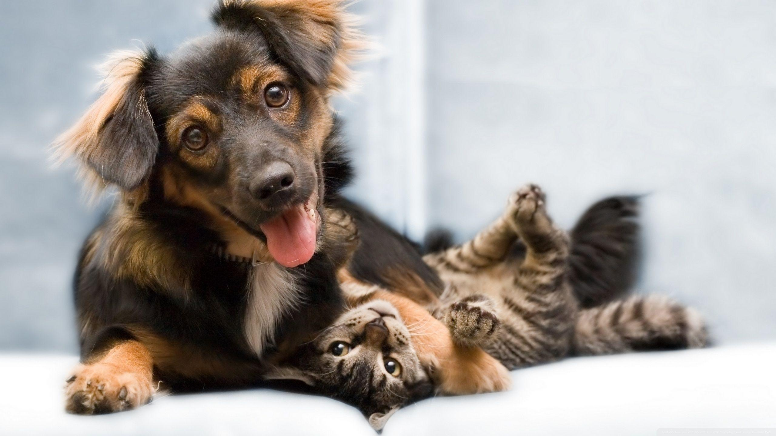 Cat And Dogs Wallpapers Wallpaper Cave