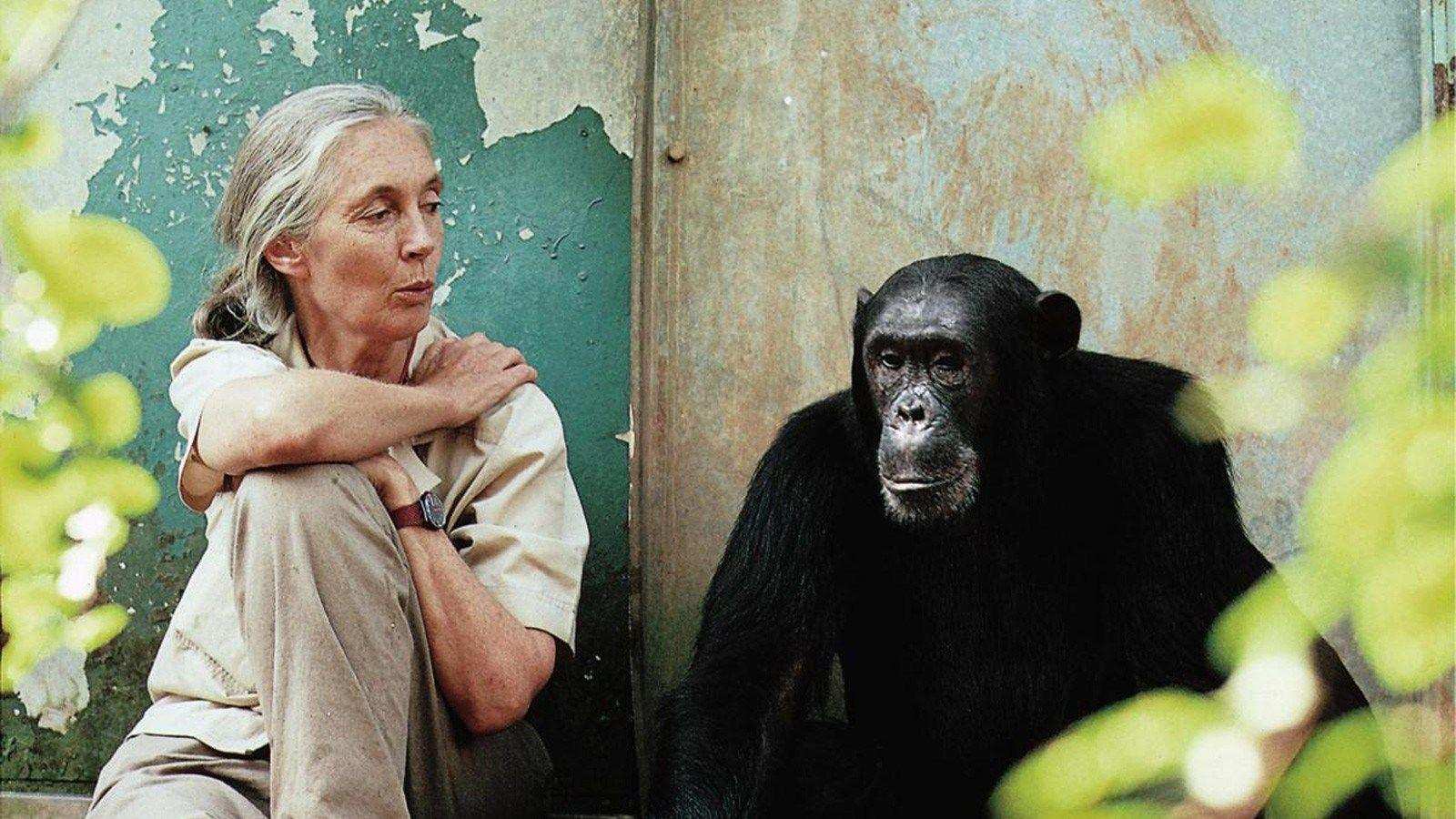 The Incredible Journey of Jane Goodall | Ever Widening Circles
