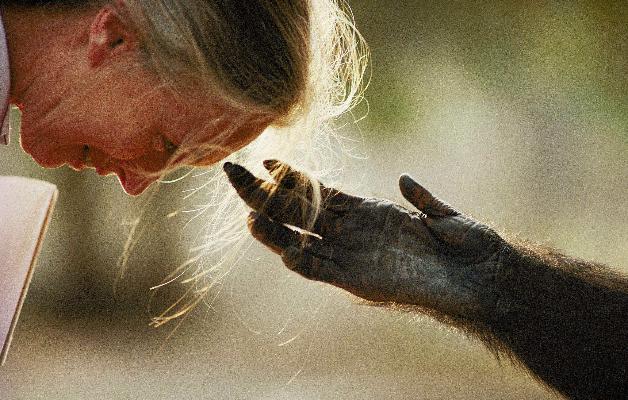 Nick Nichols on Capturing the Essence of Jane Goodall | Jane ...