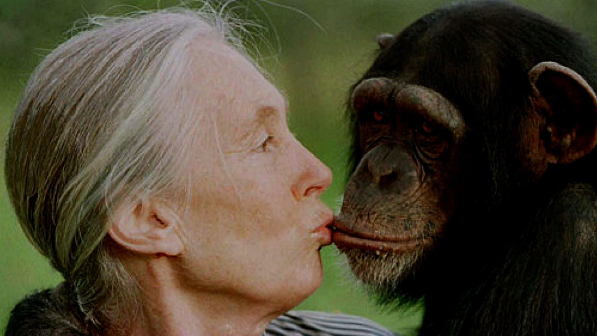 Face to Face with Jane Goodall | SciTech Now - YouTube