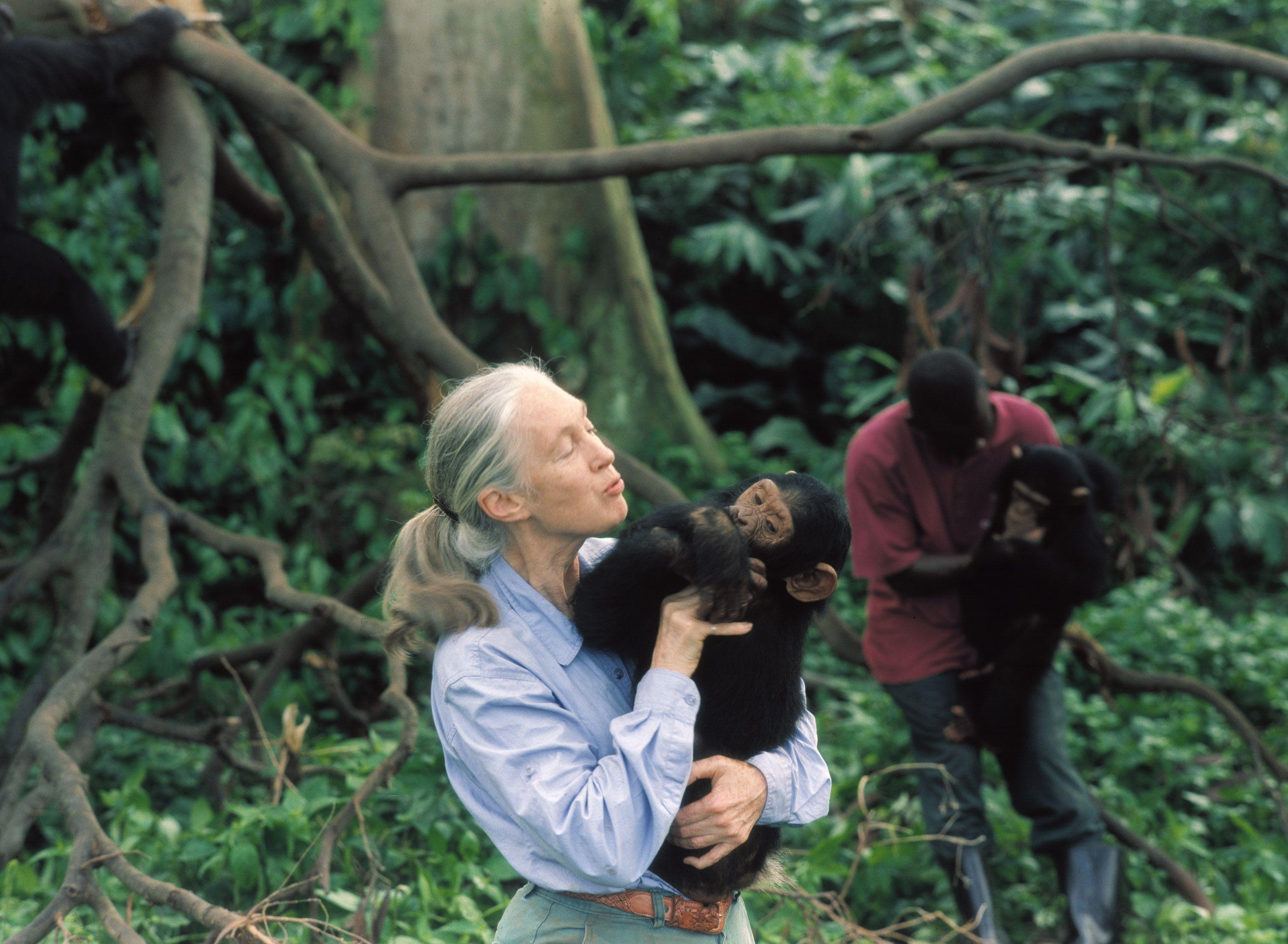 Jane Goodall 珍·古道尔/ 珍·古德| 一些照片(some pictures)