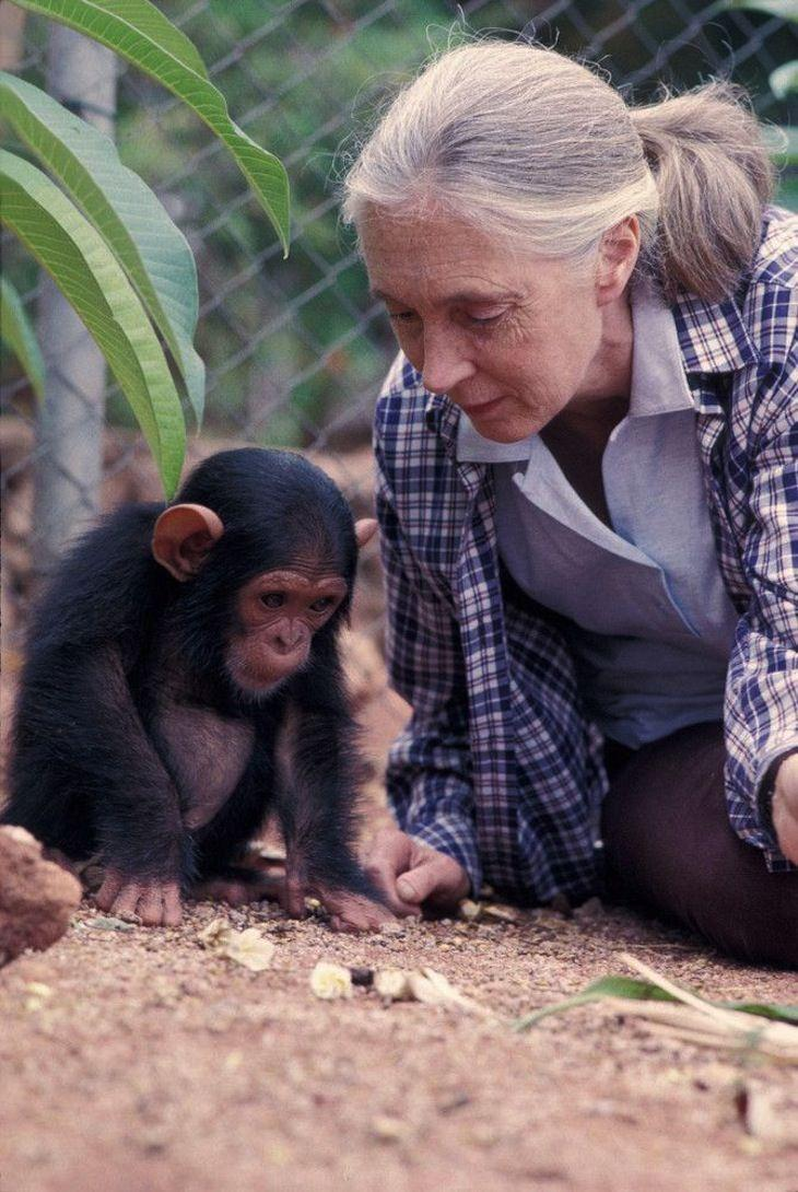 TOP 10 Things to know about Jane Goodall | Jane goodall, Primate ...