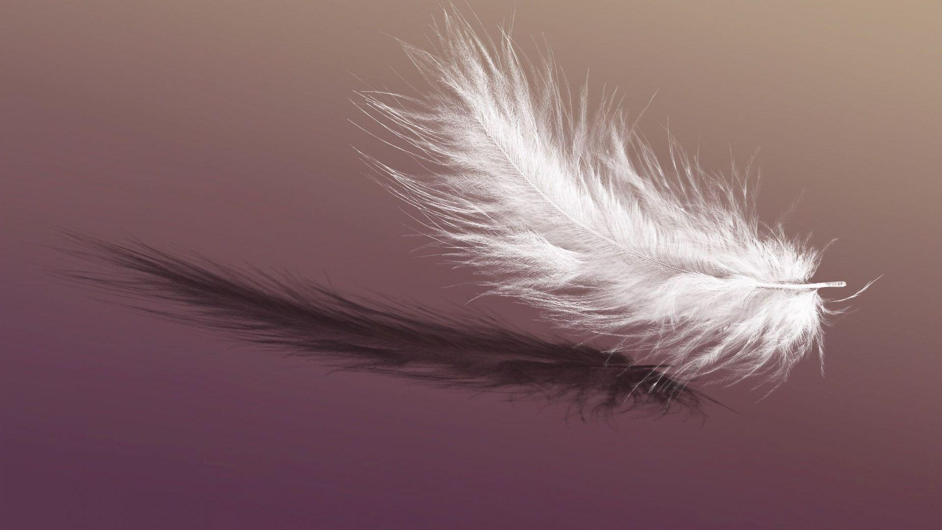 Feather Wallpapers - Wallpaper CaveFeather Background Twitter