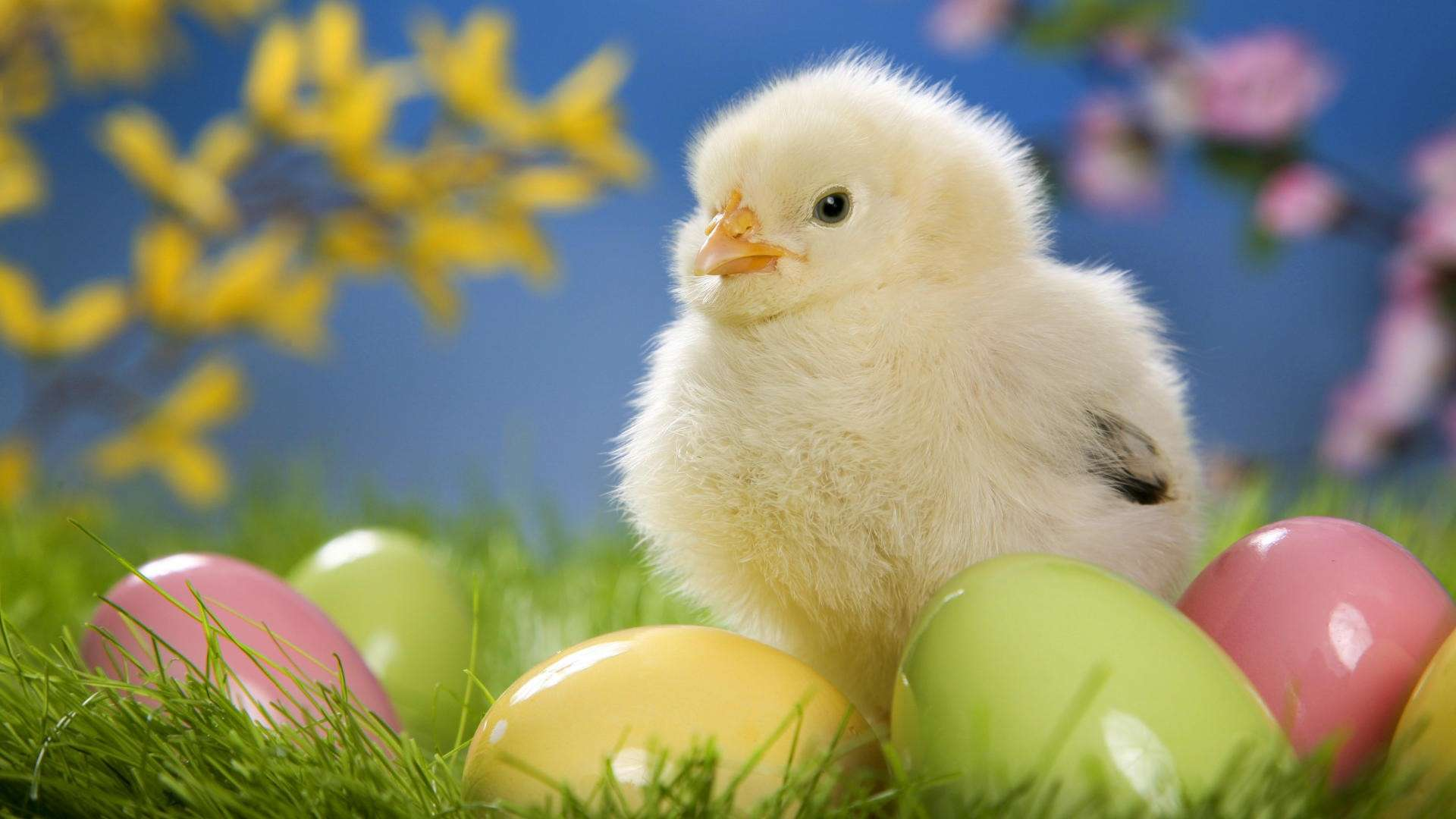 undefined Cute Easter Wallpapers (33 Wallpapers) | Adorable ...