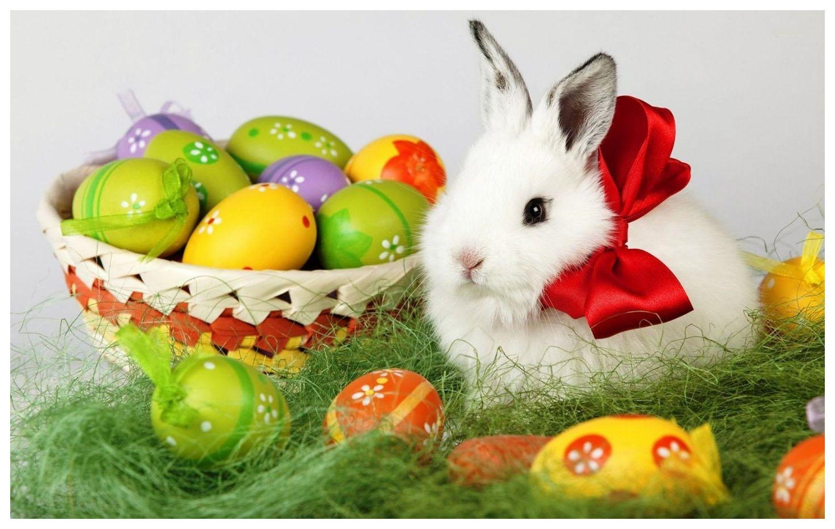 Easter Bunny HD Wallpapers - Wallpaper Cave
