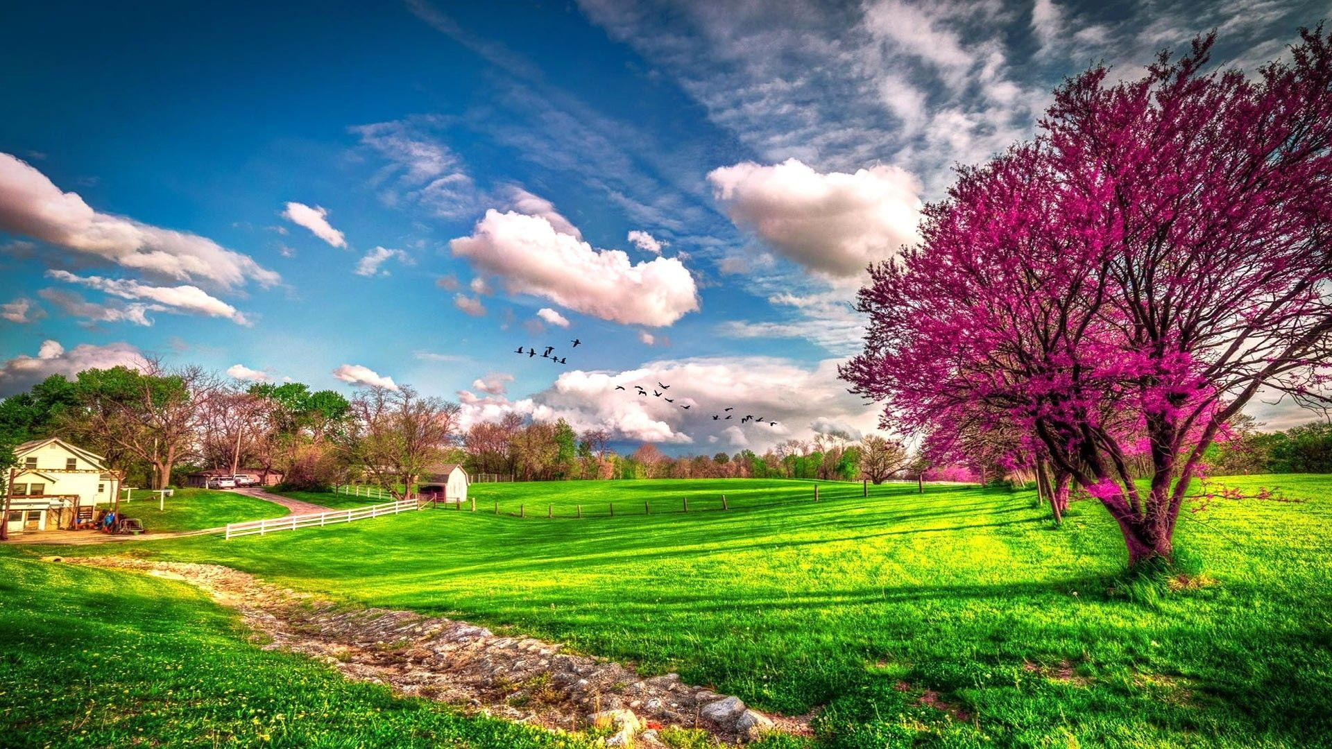 HD Spring Nature Backgrounds