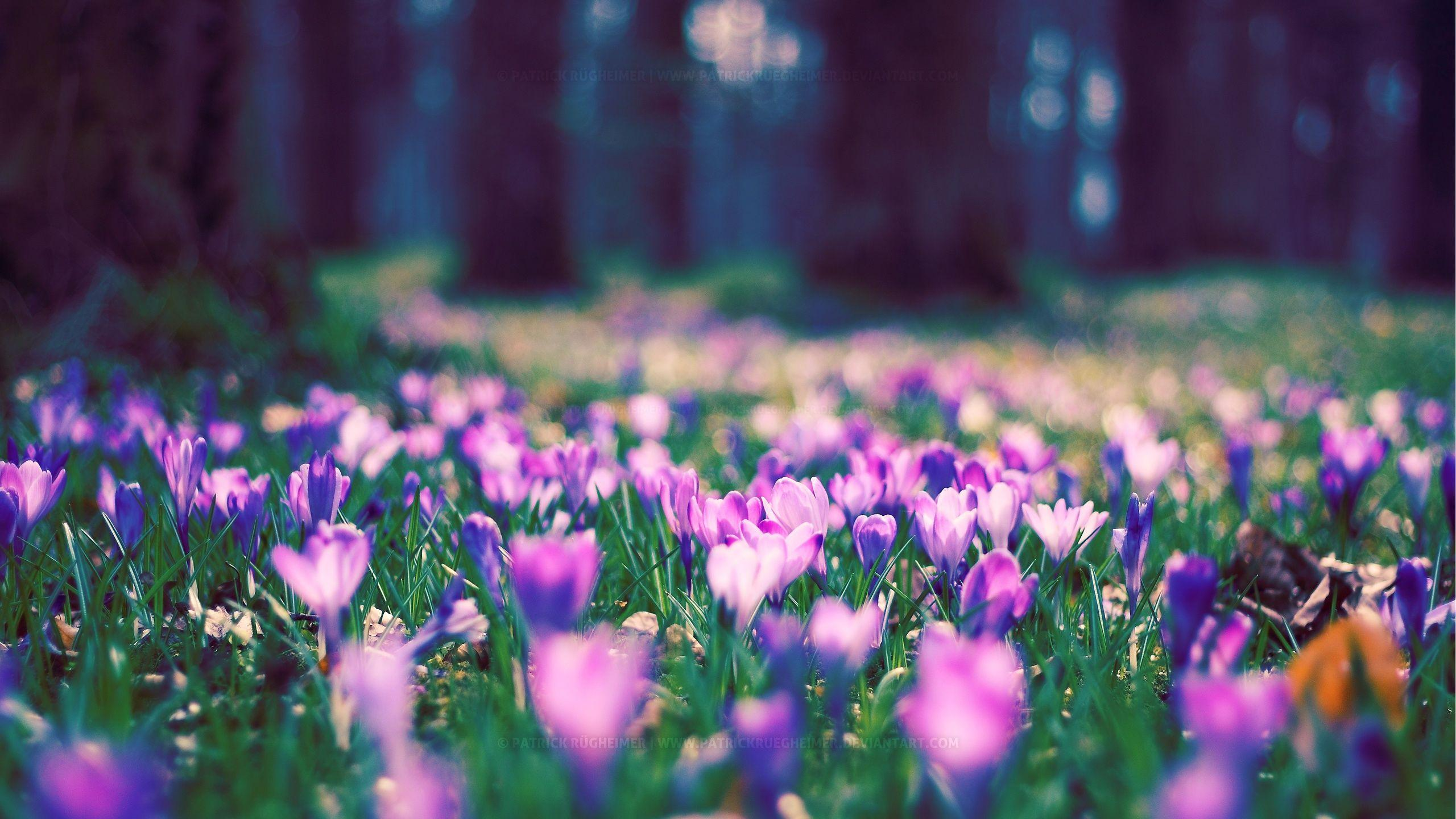 Flowers Spring Wallpapers Wallpaper Cave