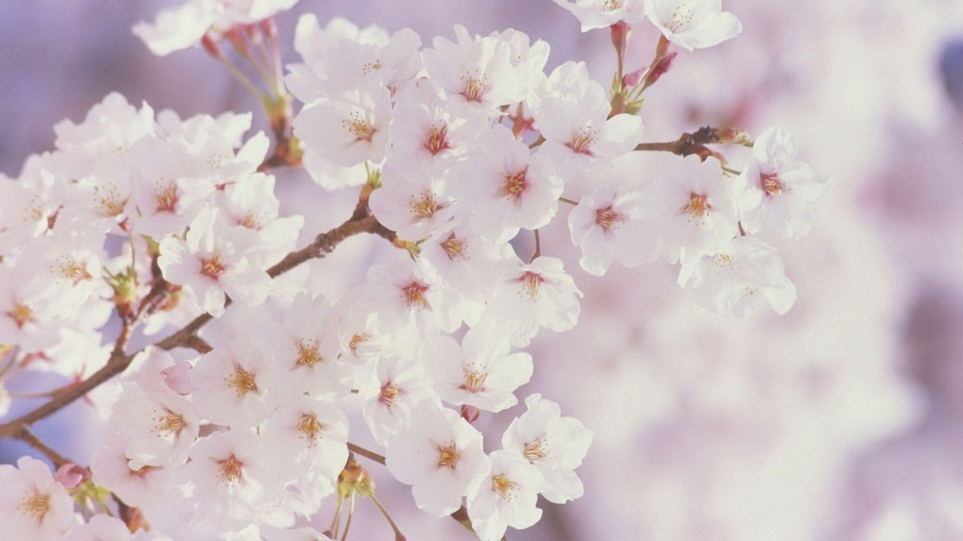 Flowers spring wallpapers wallpaper cave spring flowers desktop wallpaper this wallpaper mightylinksfo