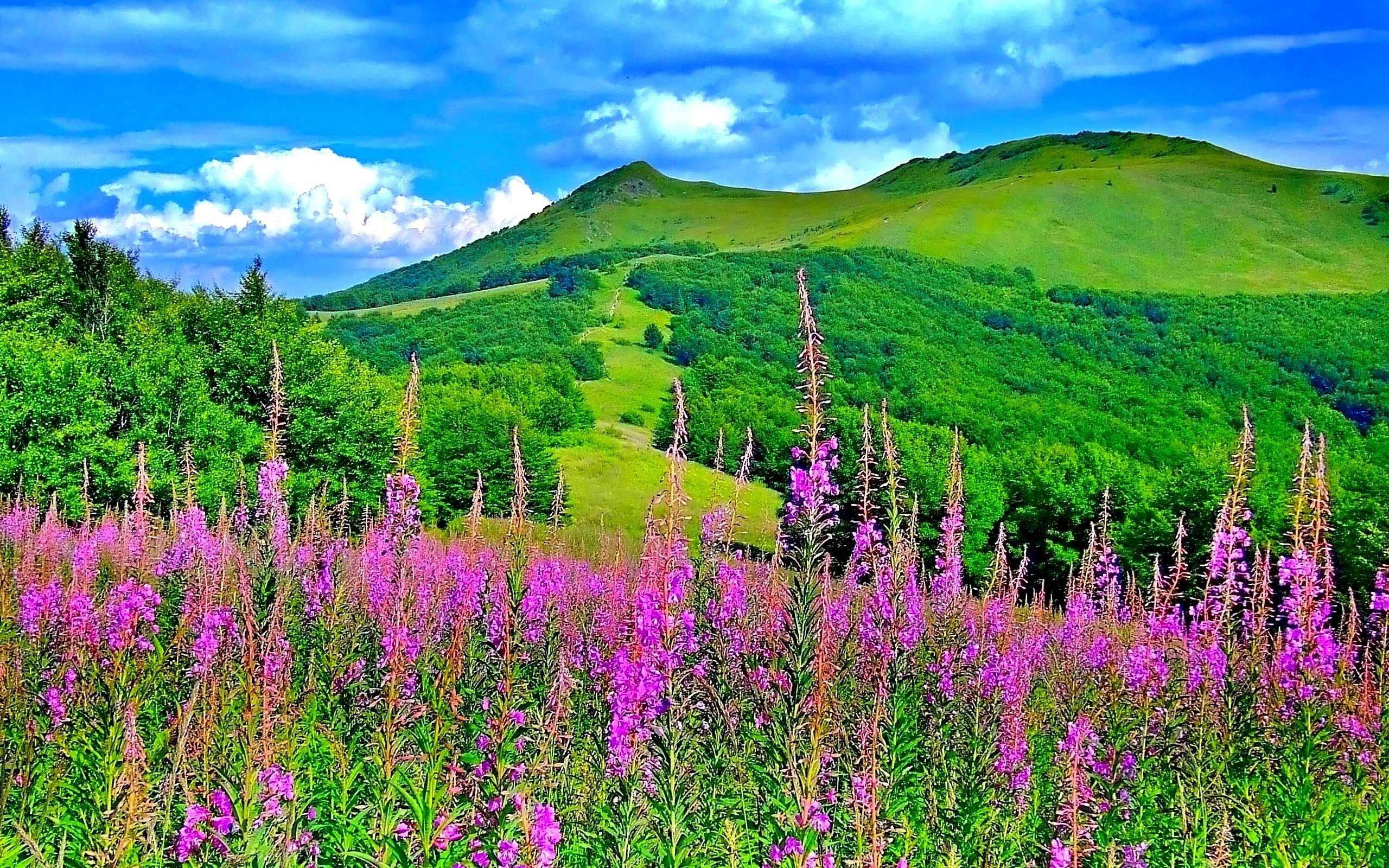 Beautiful Nature Spring Wallpapers Hd Pictures 4 HD Wallpapers
