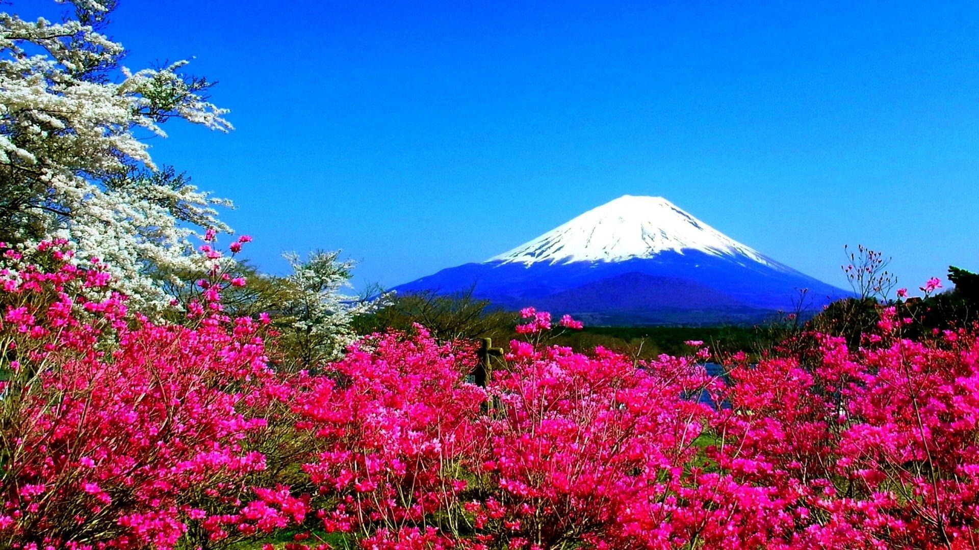 Spring Mountain Flowers Japan Fuji Nature Hd Wallpapers 23638