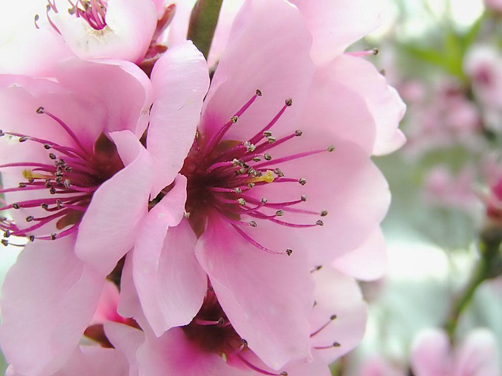 Spring Flowers Wallpaper 2014 HD | I HD Images